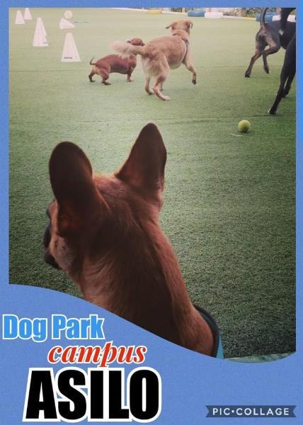 Dog Park Campus